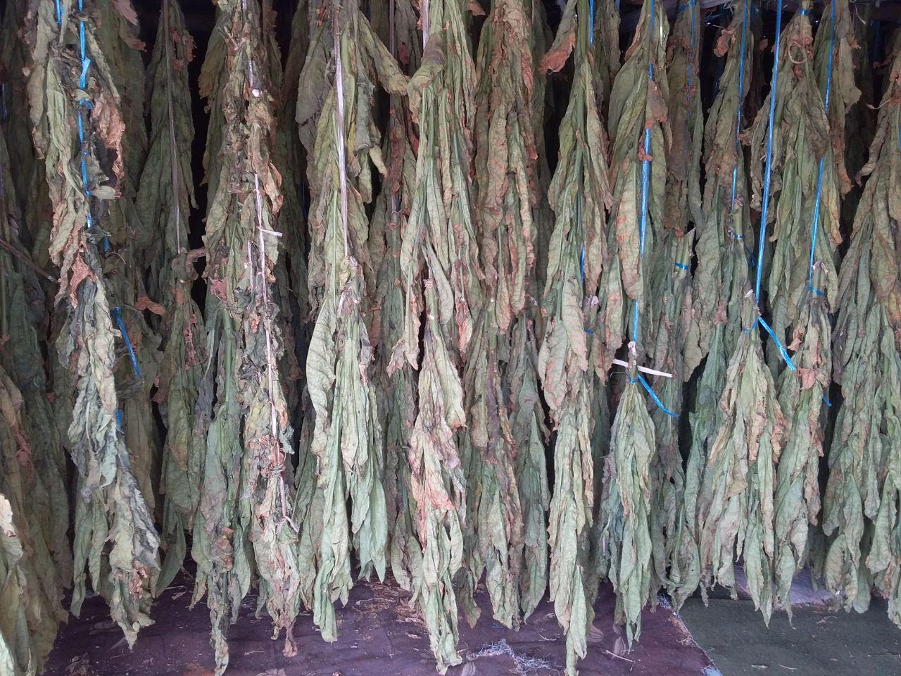 Wholesale Dokha tobacco - Enjoy Dokha